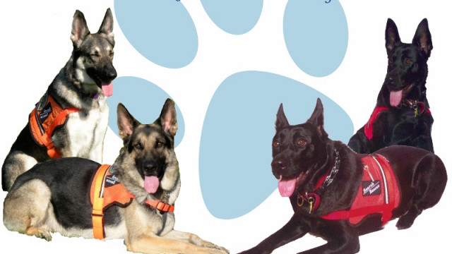 Dogs Finding Dogs K9 Search Rescue for All Missing Pets