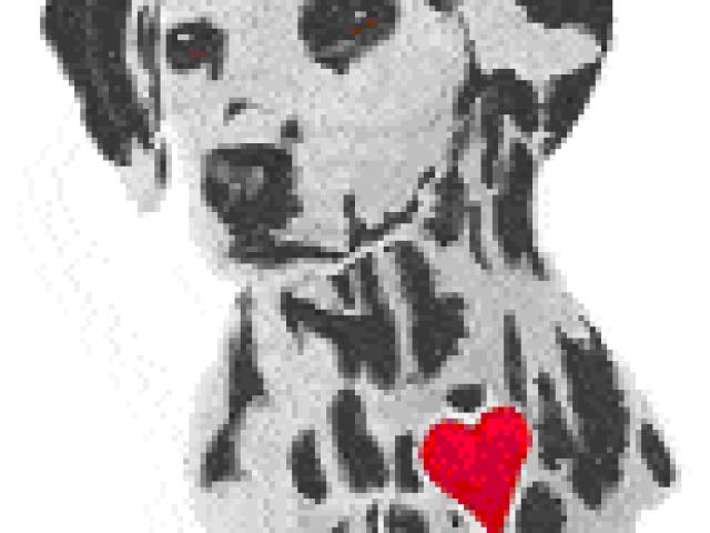 Willing Hearts Dalmatian Rescue, Inc.