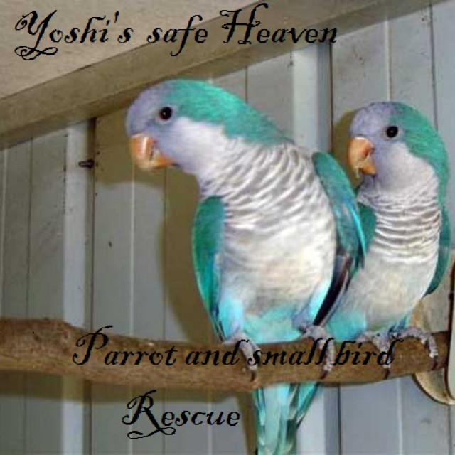 Yoshi's Safe Haven
